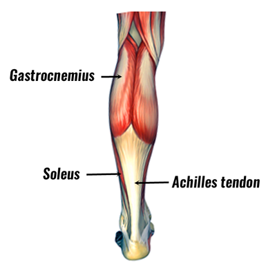 Muscle Strains Top Ten Sporting Injuries