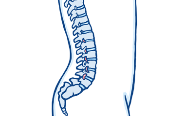 The Shape of Your Spine