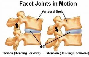 facet_joints