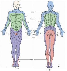 lower leg dermatomes
