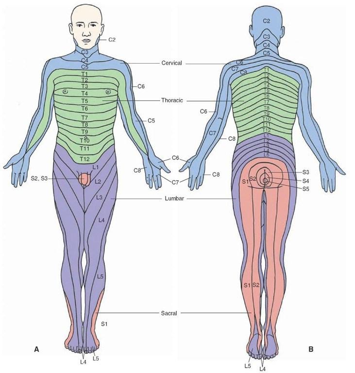 lower leg dermatomes