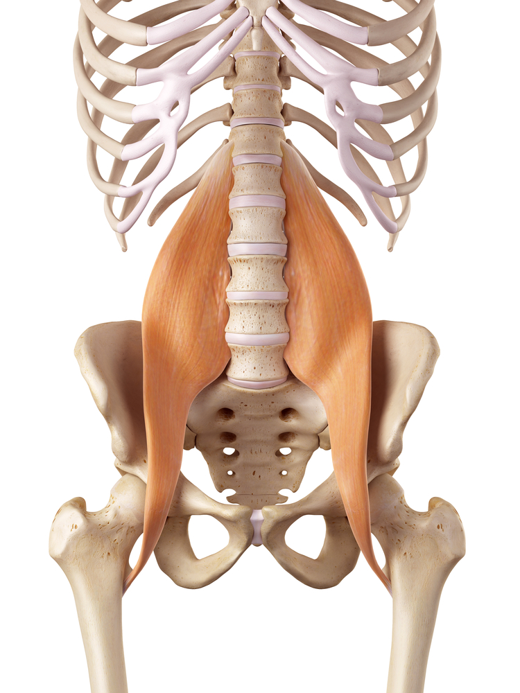 Muscle And Ligament Pain In The Lower Back