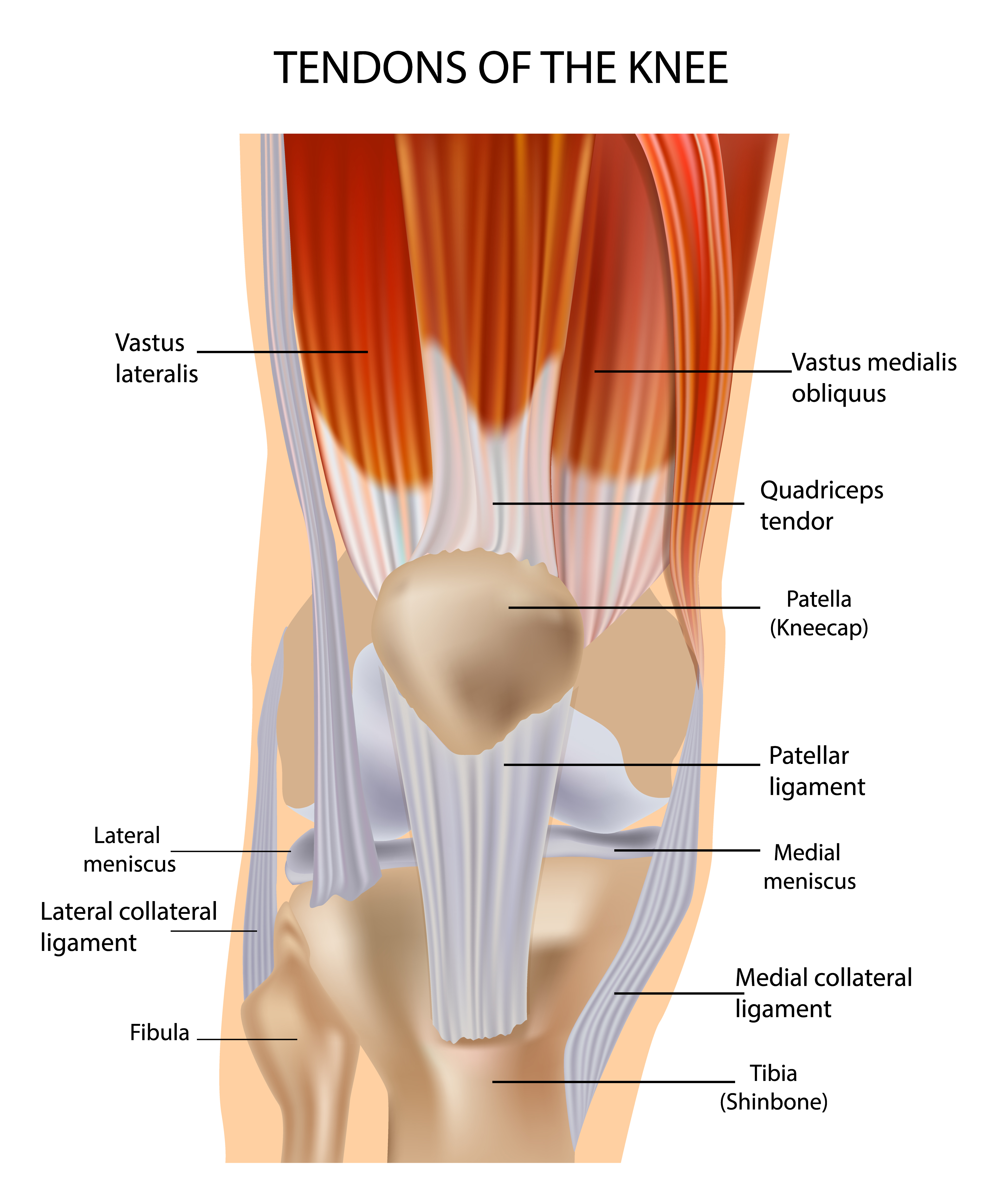 Tendon And Bursitis Problems In The Knee