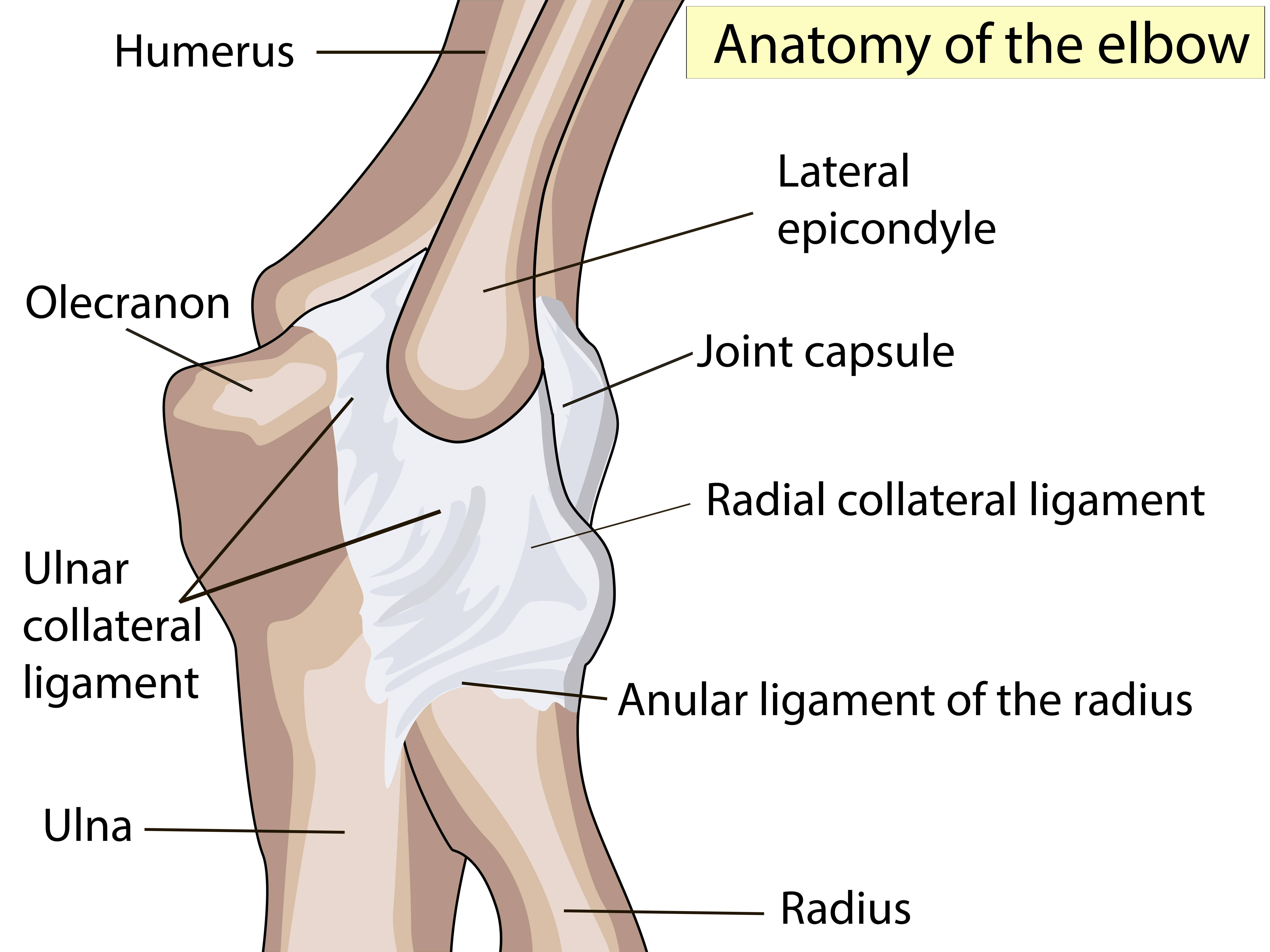 Common Tendon And Soft Tissue Injuries In The Elbow