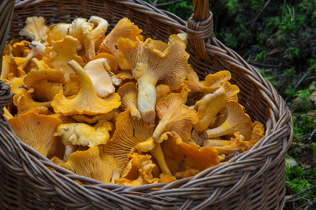 Did you know that Mushrooms have a beneficial effect on Our Brain Health?