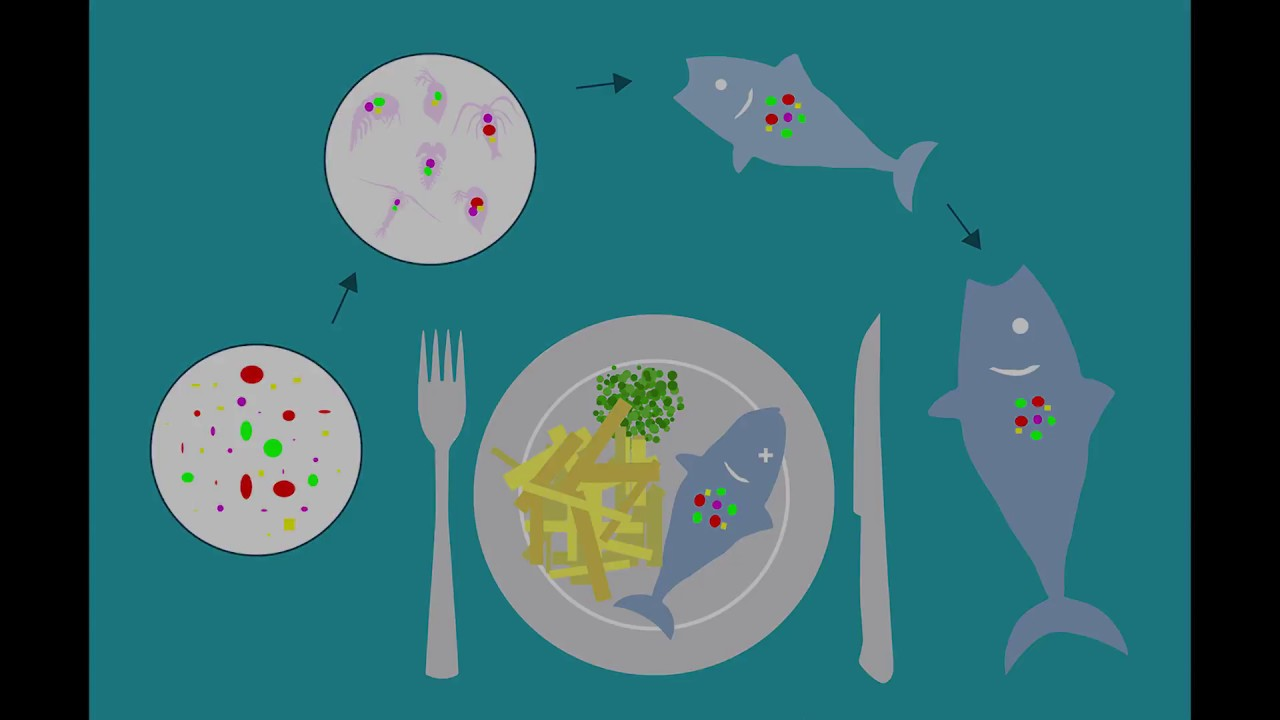 An Unwanted Food Ingredient; Microplastics